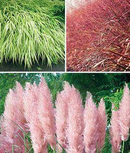 Ornamental Grass Collection, , large