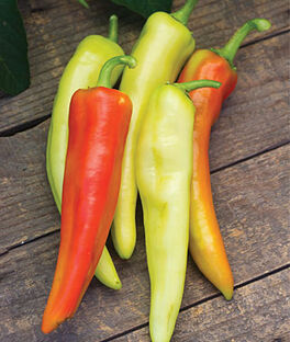 Pepper, Hot, Hot Daddy Hybrid, , large