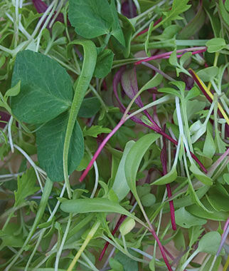 Microgreens Burpee's Mix, , large