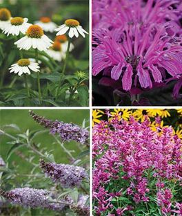 Perennial Pollinator Garden Collection, , large