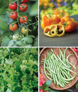 Easy to Grow Vegetable Collection, , large