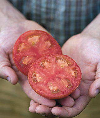how to grow seedless tomatoes