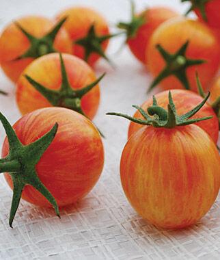 Tomato, Sunrise Bumble Bee 1 Pkt. (25 seeds) Cherry Tomato Seeds, Currant Tomato Seeds, Grape Tomato Seeds, Cherry Tomato, Tomato Seeds