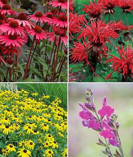 Warm Weather Perennial Garden, , large