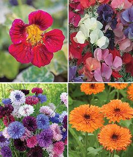 Cool Weather Flower Garden, , large