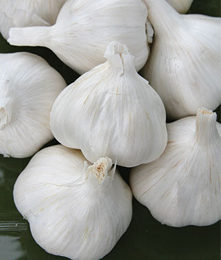 how to start garlic from bulbs