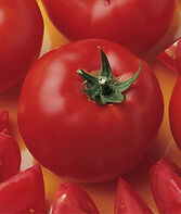 Tomato, Bush Early Girl Hybrid, , large