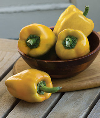 Sweet Pepper, Wagonwheel Hybrid, , large