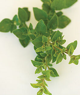 Oregano, Italian, , large