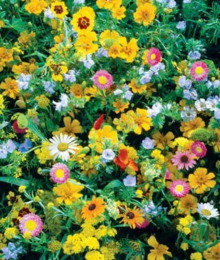Wildflowers, Perennial Mix, , large