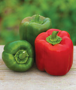 Pepper, Sweet, Candy Apple Hybrid, , large