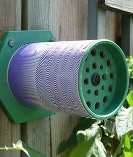 Solitary Pollen Bee Nest, , large