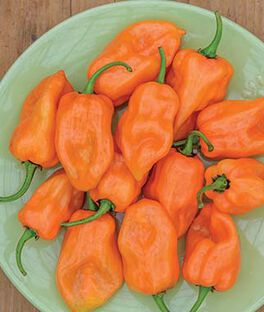 Pepper, Hot, Habanero, , large