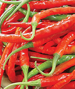 Pepper, Hot, Long Red Slim Cayenne, , large