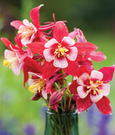 Columbine, Origami Red & White, , large