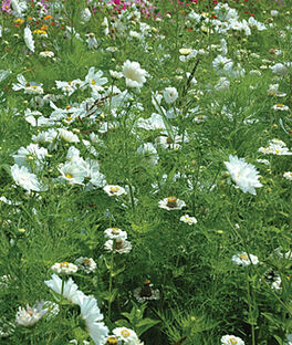 Mixed Flowers, White Annuals, , large