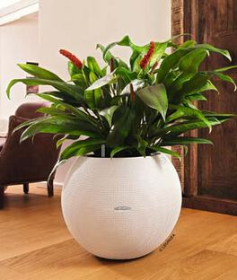 Puro 50 Spherical Planter, , large