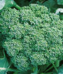 Broccoli, Bonanza Hybrid, , large