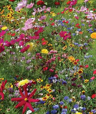 Wildflowers, Hummingbird & Butterfly Mix, , large