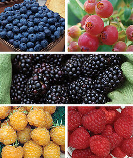 Favorite Fruit Collection, , large