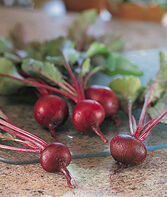 Beet, Little Chicago Hybrid, , large