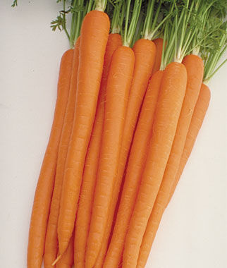 Carrot, Sugarsnax Hybrid, , large