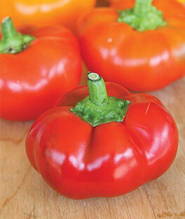 Pepper, Sweet Hungarian Cheese Red, , large