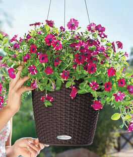 Self-Watering Hanging Basket, , large