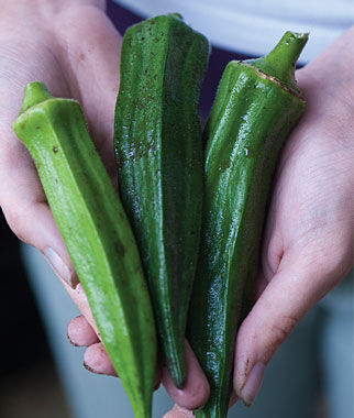 Okra, Perkins Mammoth Long Pod, , large