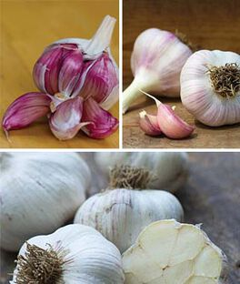 Northern Favorites Fall Garlic Collection, , large