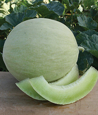 Melon, Fabulous, , large