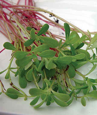 Salad Greens, Purslane Goldgelber, , large