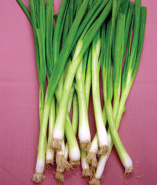Bunching Onion, White Lisbon , , large