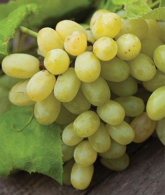 Grape, Marquis Seedless, , large
