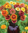 Zinnia, Jazzy Mix, , large