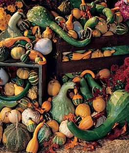 Gourd, Ornamental Big Gourds Mix, , large