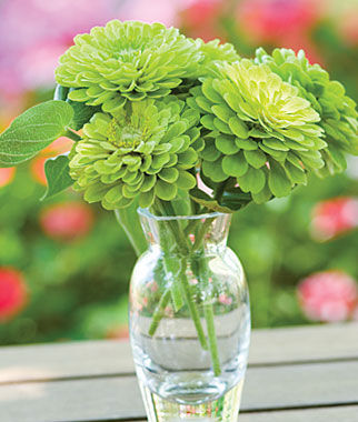 Zinnia, Tequila Lime, , large