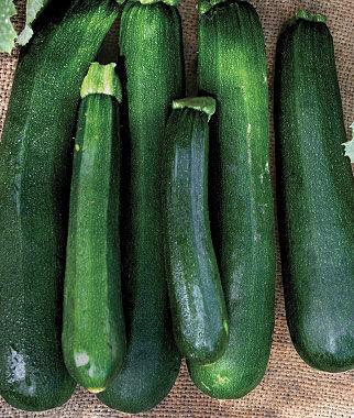 Image Result For Average Size Vegetable Garden