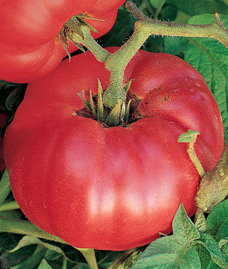 Tomato, German Johnson 1 Pkt. (30 Seeds) Tomatoes, Tomato Seeds, Beefsteak Tomatoes, Slicing Tomatoes, Tomato Starts, Tomato Plants