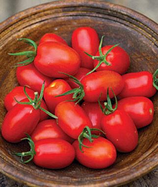 Tomato, Sweet Zen Hybrid 3 Plants, Tomato Seeds, Early Tomatoes, Early Tomato Seeds, Tomato Plants, Short Season Tomatoes, Garden Seeds