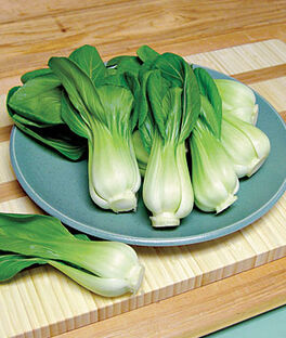 Chinese Cabbage, Pak Choi, Toy Choi Hybrid, , large