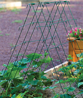 Squash and Cucumber A-Frame, , large