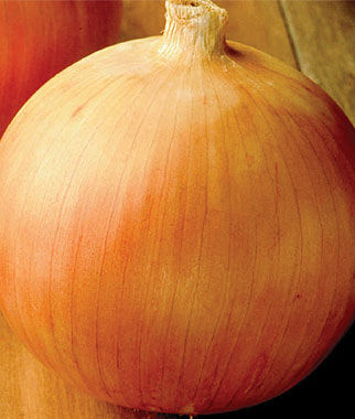 Onion, Big Daddy 2 bunches (150 Plants) Onion Seeds, Onion Sets, Onion Plants, Scallion Seeds, Bunching Onions, Green Onions, Garden Seeds
