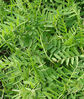 Cover Crop, Cold Climate Mix, , large