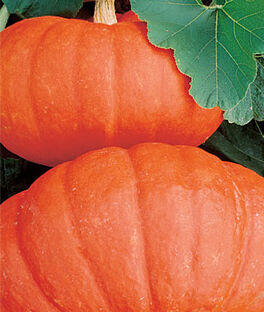 Pumpkin, Rouge Vif d'Etampes, , large