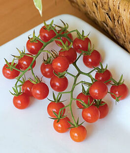 Tomato, Honeybunch Hybrid, , large