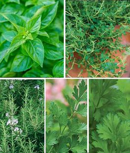 Windowsill Herb Collection, , large