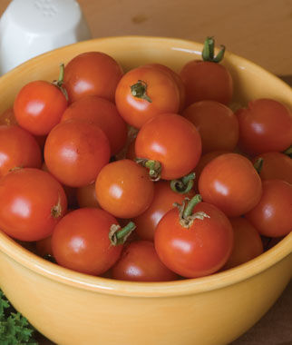 Tomato, Super Sweet 100 Hybrid , , large