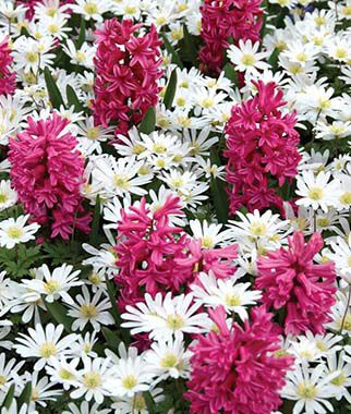 Tickled Pink Flower Mix, , large