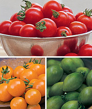 Tomato, Stop N' Go Collection, , large